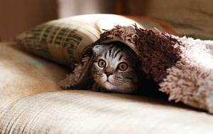 Как удалить запах кошачьей мочи с мягкой мебели?