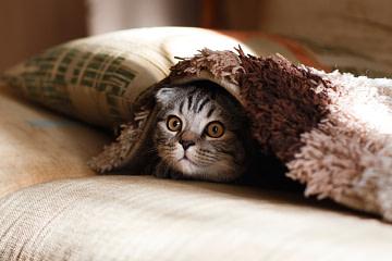Картинка кота